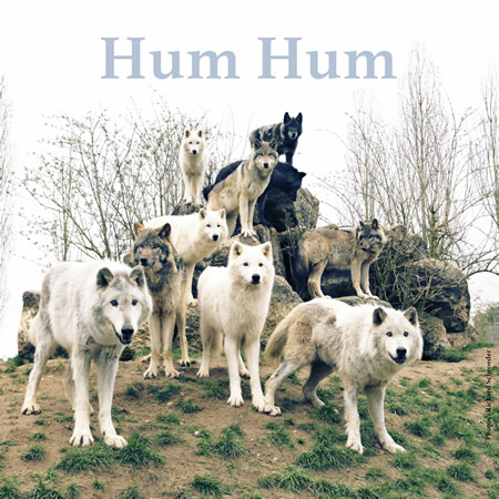 "Hum Hum - ""EP Blueberries"" : La chronique"